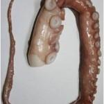 Octopu leg